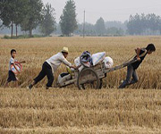chinese farmers